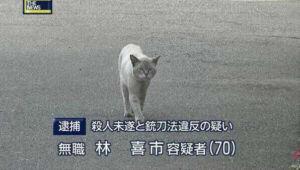 livejupiter 1608414256 4401 300x170 - 【鬼畜】 彼女「新居だけど、その…猫連れて行くのはちょっと…ね?保健所とか里親とか…ね?」